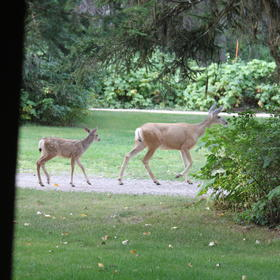 Wildlife can be seen from the cabin