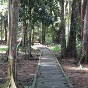 Bukit Saban Resort - Jungle Walk Path